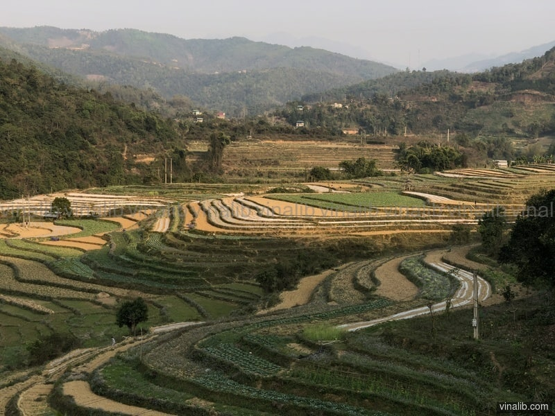 Ha Giang rice fields at dawn - Vinalib Stock Pictures