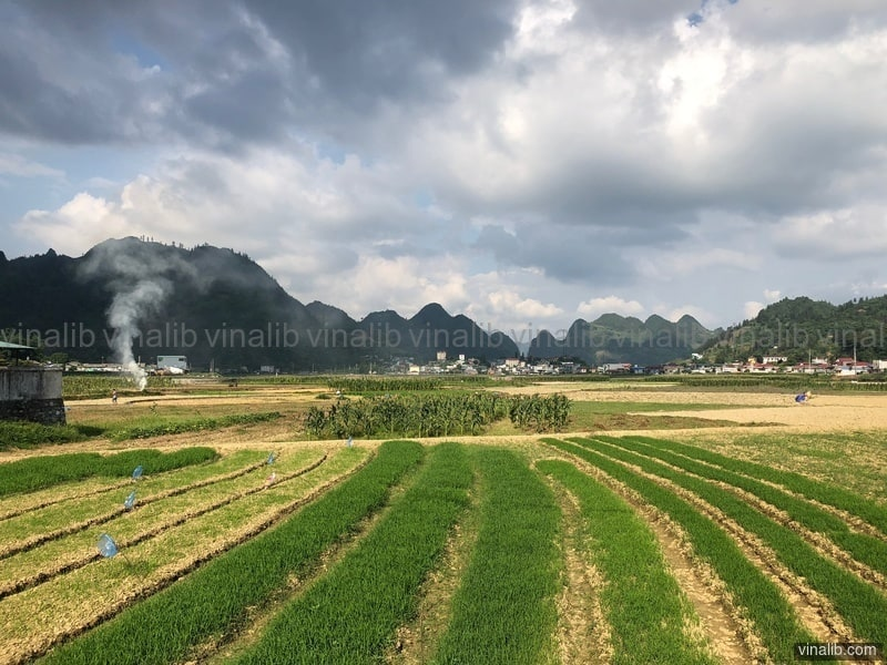 Muong Khuong - Vinalib Stock Pictures
